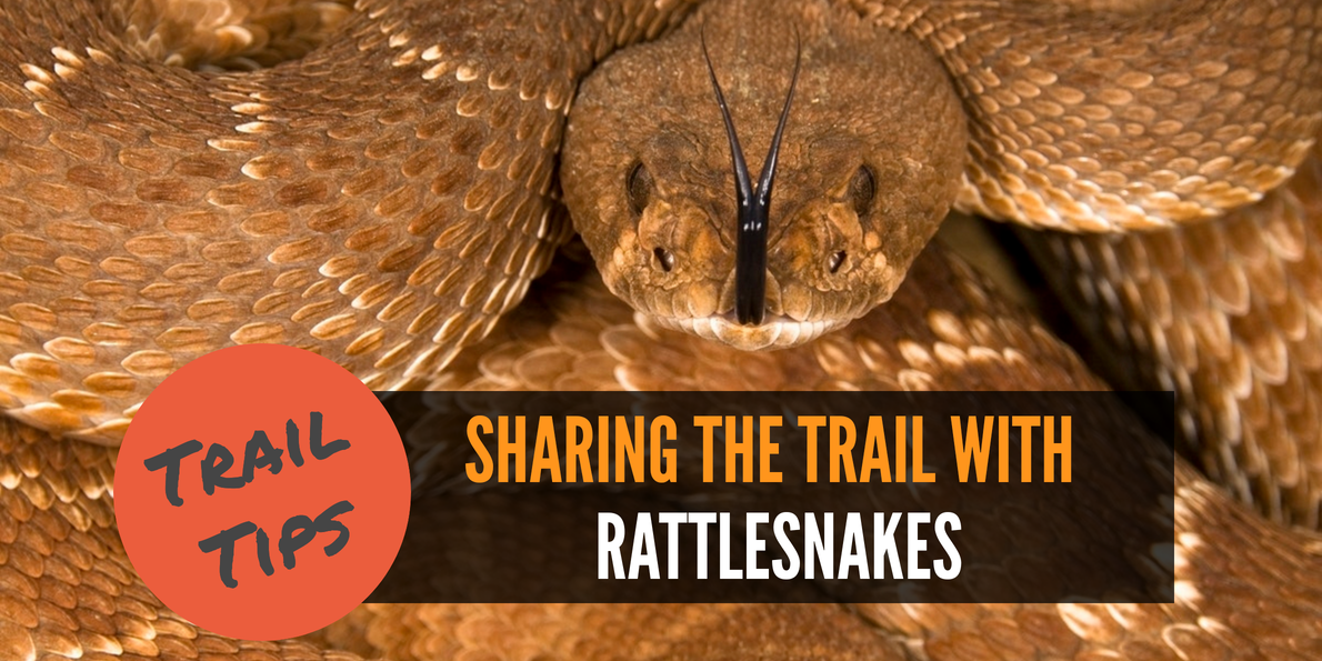 Don't freak out! Follow these tips if you run into a rattlesnake while hiking.