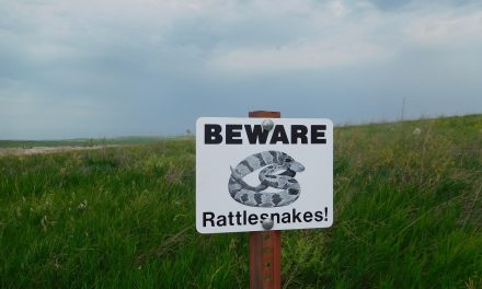 Yikes! What if I see a rattlesnake while hiking?!