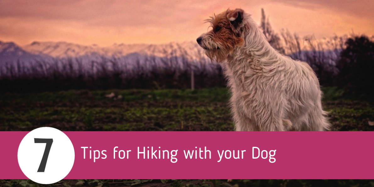 These seven tips for hiking with your dog will help ensure a safe and enjoyable hike.