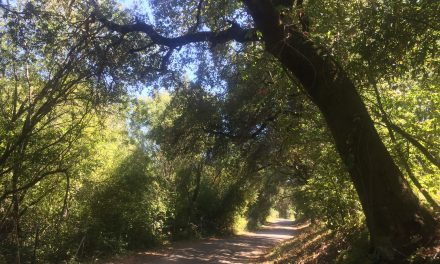 Crystal Springs San Andreas Trail