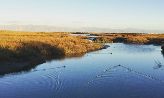 Palo Alto Baylands Adobe Creek Loop