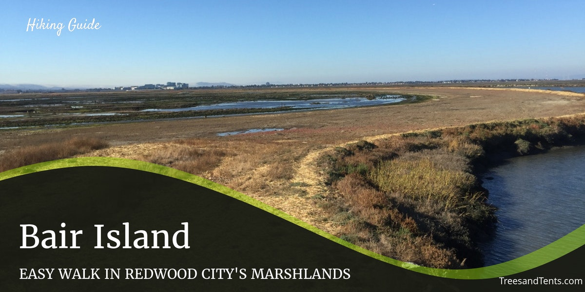 The tidal marsh of Bair Island is home to a variety of birds