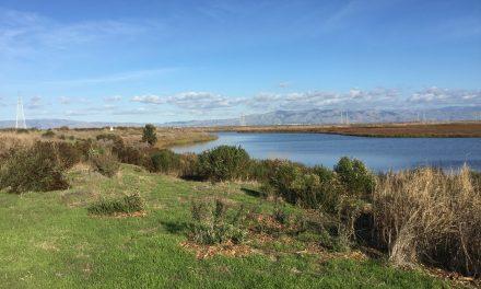 Palo Alto Baylands Byxbee Park Hills Walk
