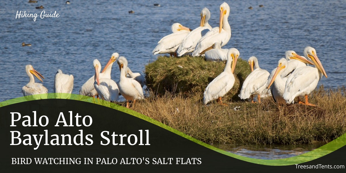 These pelicans are just some of the birds that call the Palo Alto Baylands Byxbee Park Hills their home.