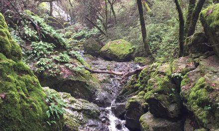 Cataract Falls: Waterfall Walk in Marin