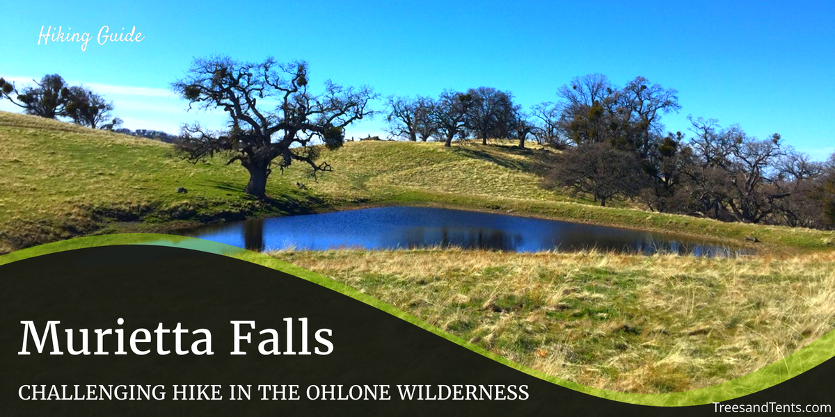 Johnny's Pond is on the way to Murietta Falls on the Ohlone Trail