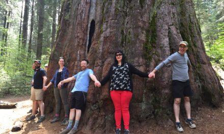 Calaveras Big Trees: Hike Among Giants