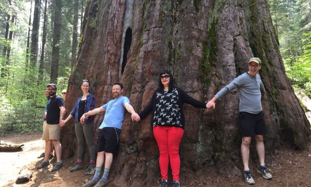 Calaveras Big Trees: Hike Among Giants