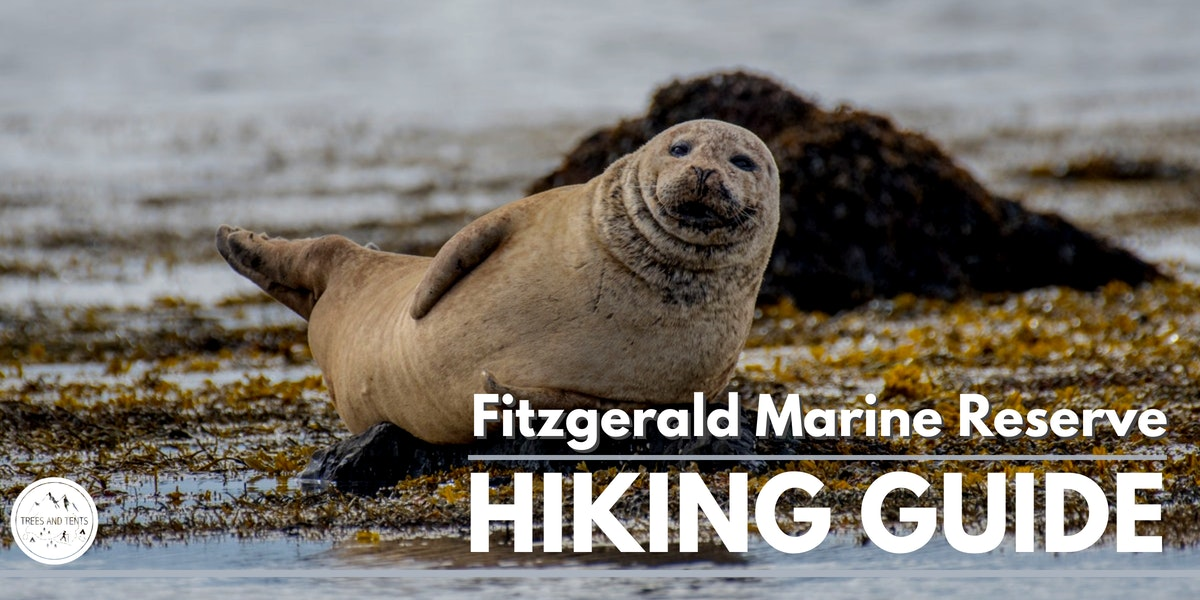 This coastal hike at the Fitzgerald Marine Reserve in Moss Beach is best done at low tide when you can walk along the tide pools and see all of the seals.