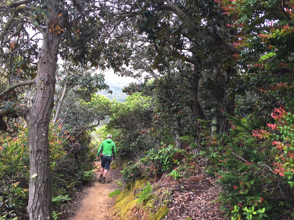 Hiking the narrow single-track Brooks Creek Trail at San Pedro Valley County Park in Pacifica