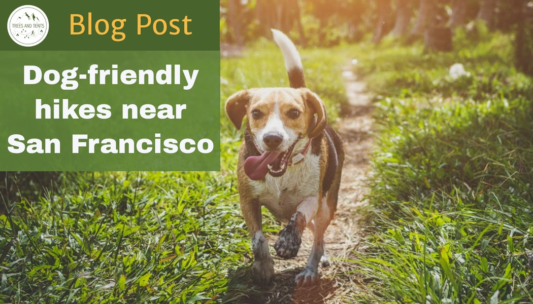 A list of dog-friendly hiking trails near San Francisco