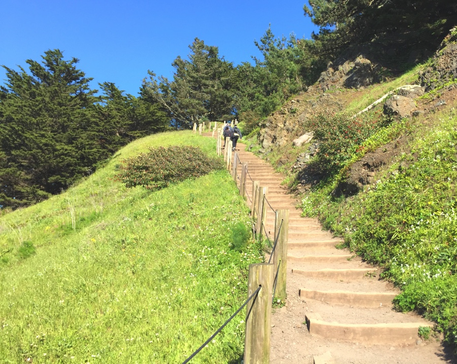 A set of wooden stairs at the Lands End hike in San Francisco