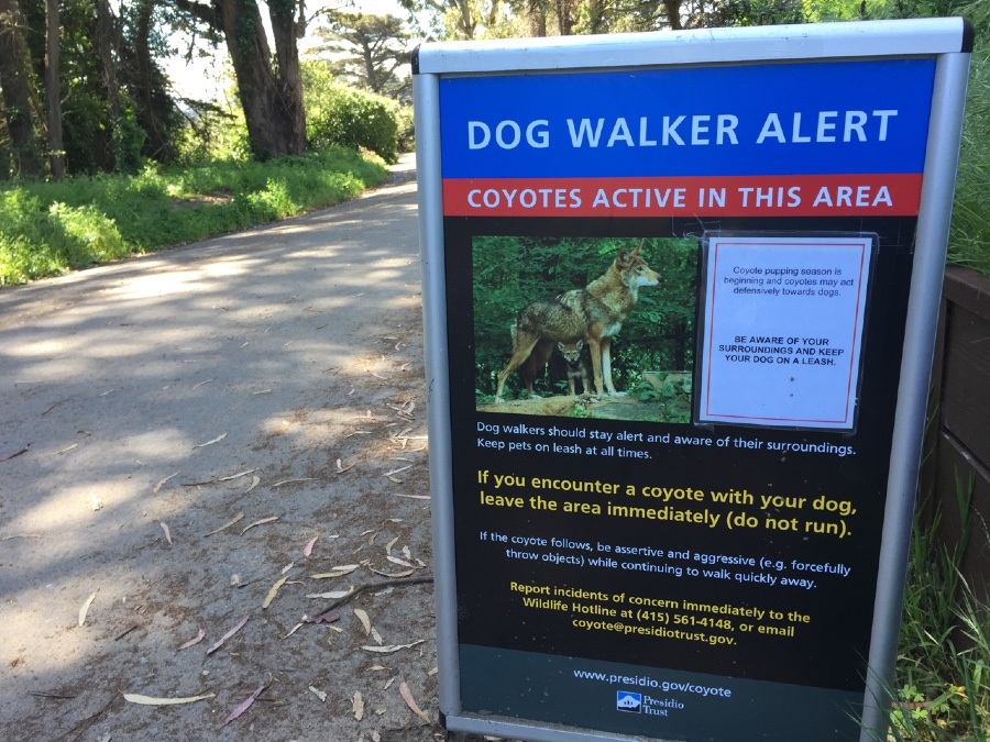 A sign in Presidio National Park warning dog walkers about active coyotes in the area.