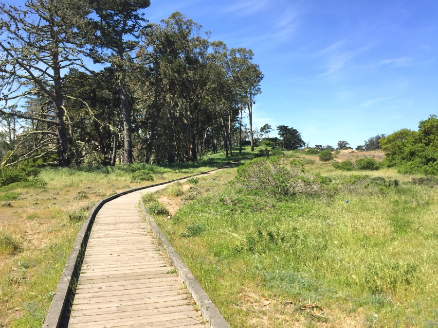 The wood boardwalk near the Marine Cemetery Vista in Presidio National Park.