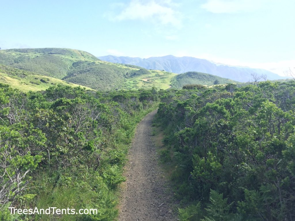 The Sweeney Ridge Trail in Pacifica is a dog-friendly hiking trail with views of the coast and the San Francisco Bay.