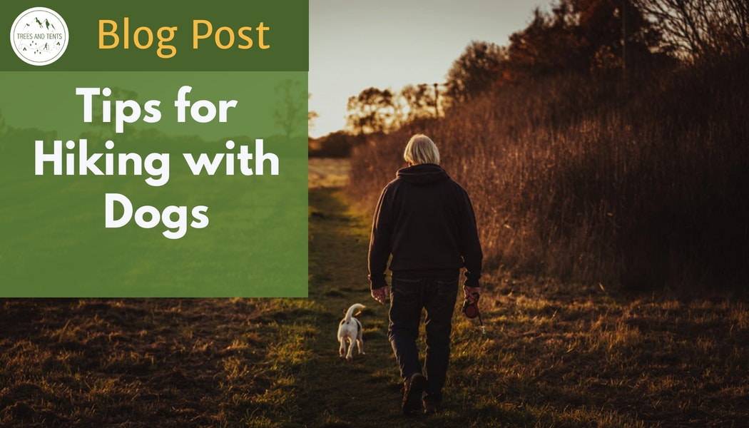 Seven tips for hiking with your dog