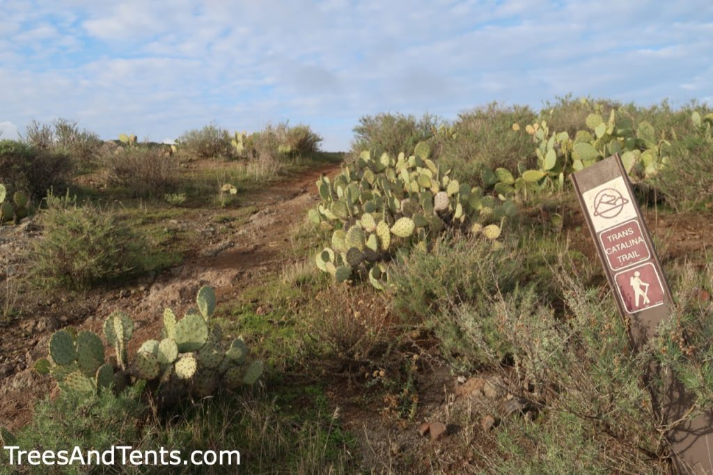 A trail marker in front of a field of cactus along the Trans-Catalina Trail