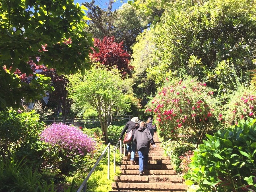 The Greenwich Stairs that lead to Coit Tower are lined with flowering gardens.