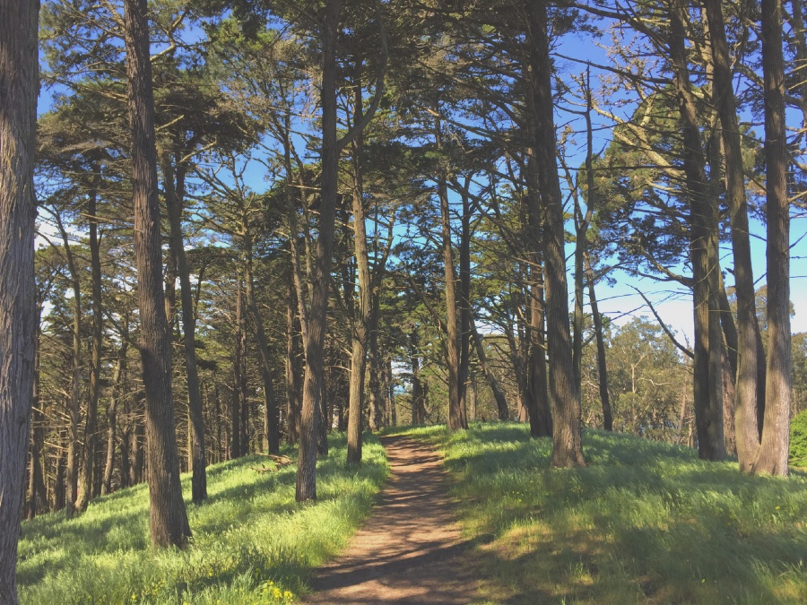 Cypress trees line the path on many of the hiking trails in Presidio National Park