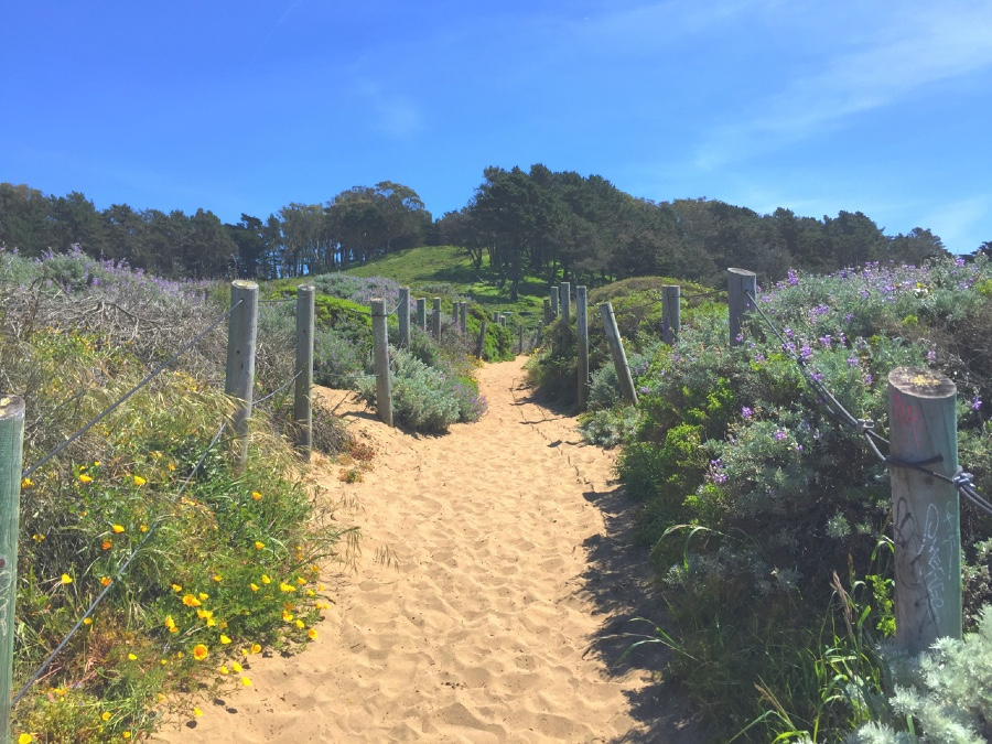 Wildflowers line the trail at the top of the sand ladder leading from Baker Beach