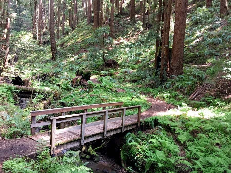 As you walk through the redwoods there are several bridges that cross creeks