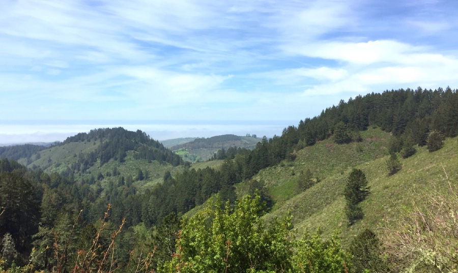 Looking out into the Santa Cruz mountains from the Harkins Ridge Trail