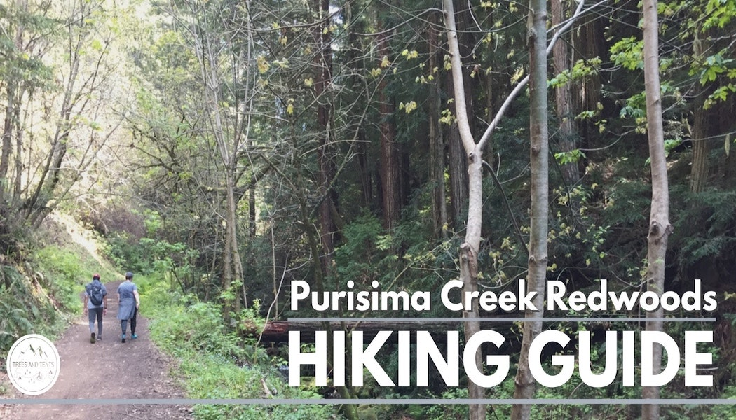 The Purisima Creek Redwoods has some of the best hiking in the San Francisco Bay Area
