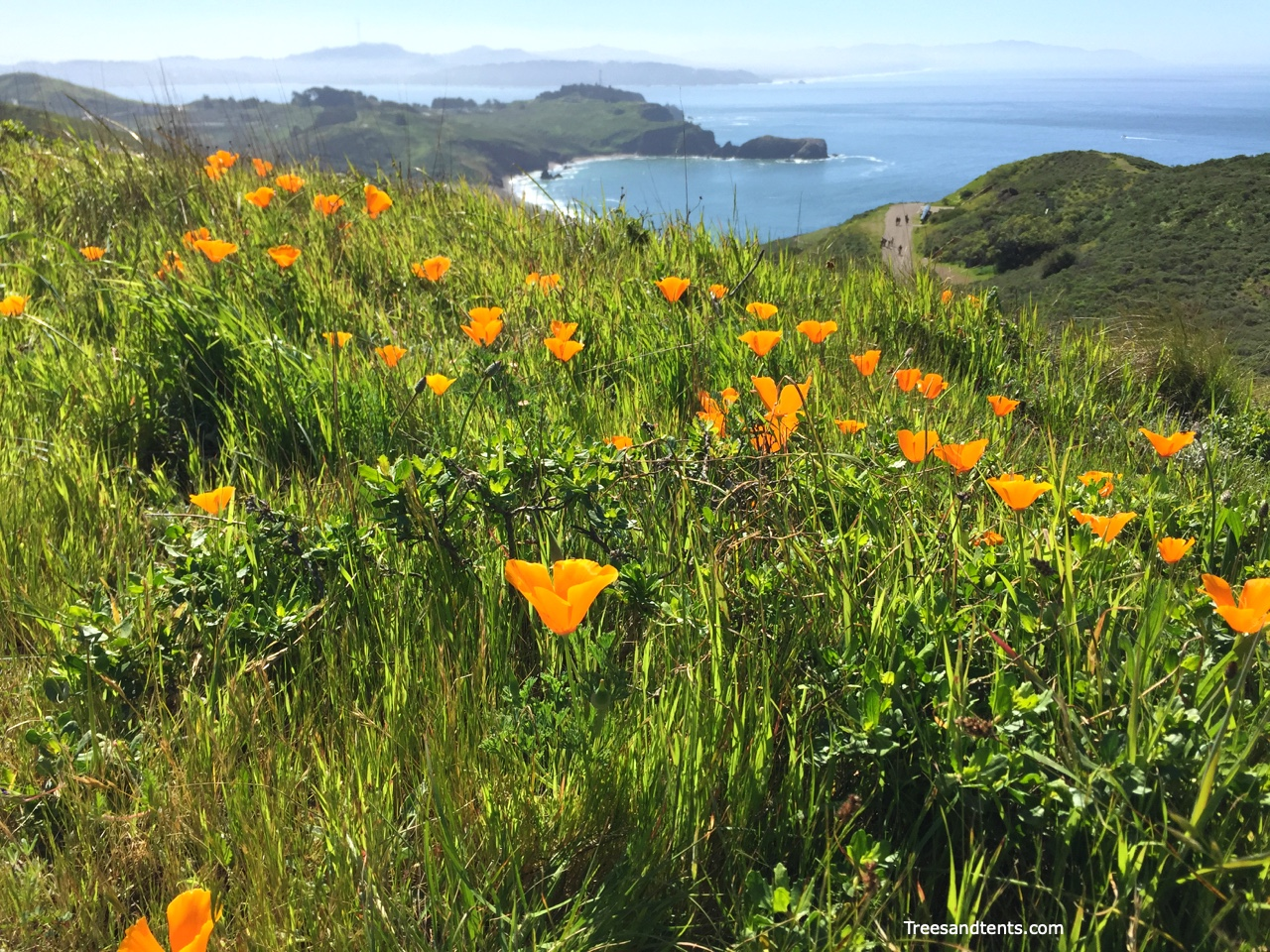 Poppies on the California Coastal Trail in the Marin headlands
