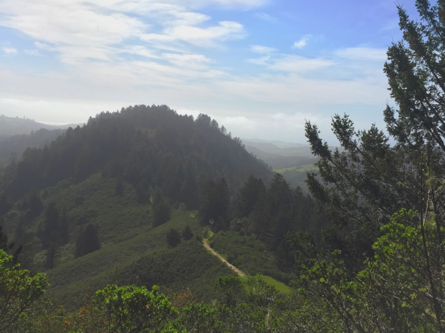 From the Whittemore Gulch trail in Purisima Creek Redwoods you can see the North Ridge Trail