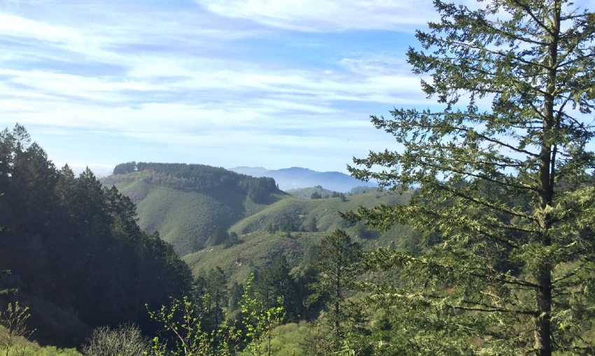 The last viewpoint on the Purisima Creek Redwoods hike