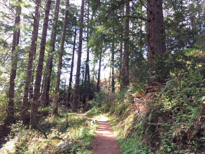 The Whittmore Gulch trail leads from the bottom of the canyon to the top of the ridge at Purisima Creek Redwoods
