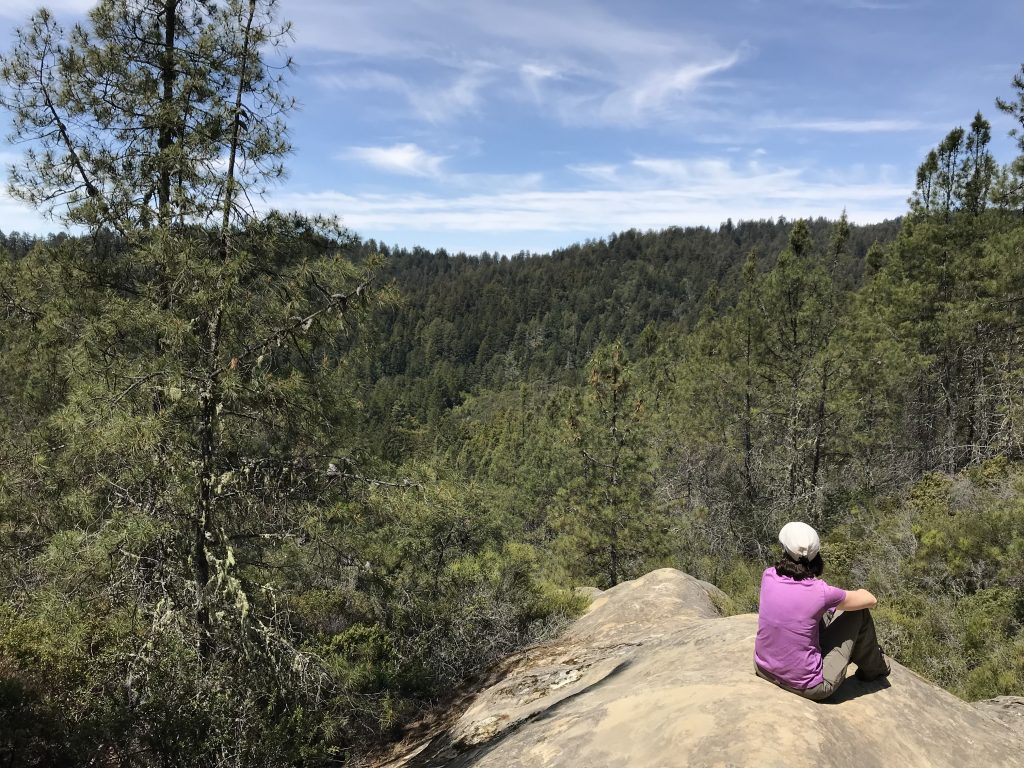 Woman sitting on a rock looking out at the forest.