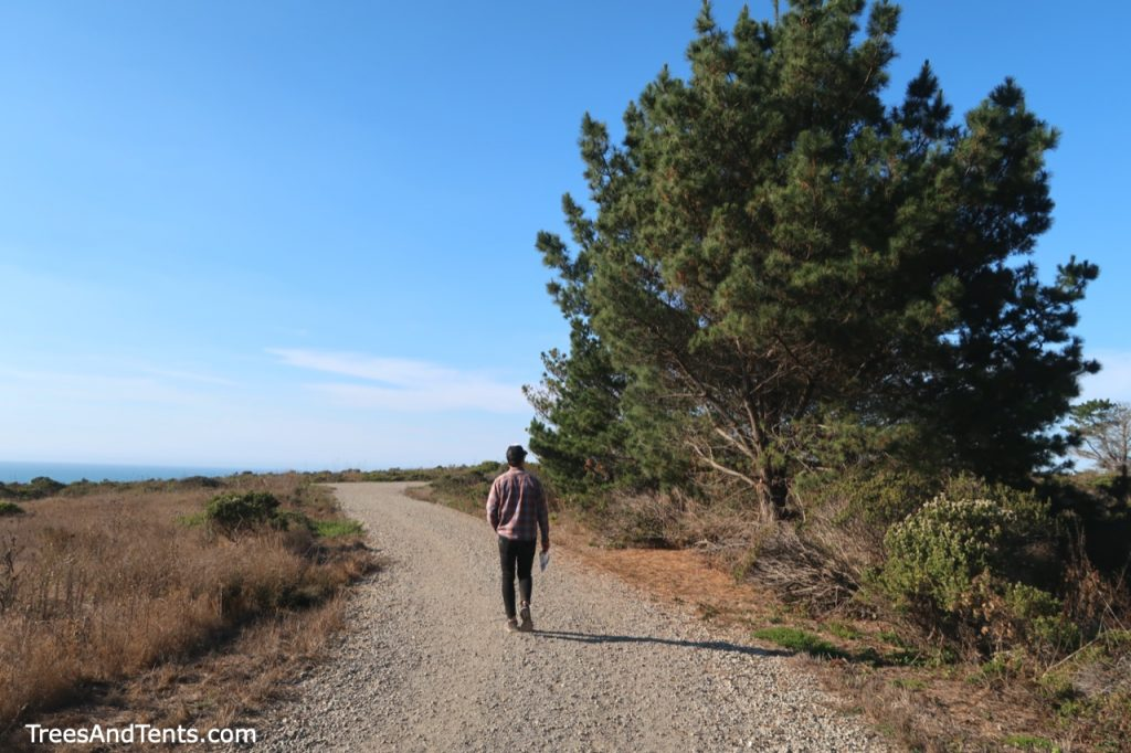 The Pillar Point hike has very little tree cover, but there are some large pine trees to help block the wind.
